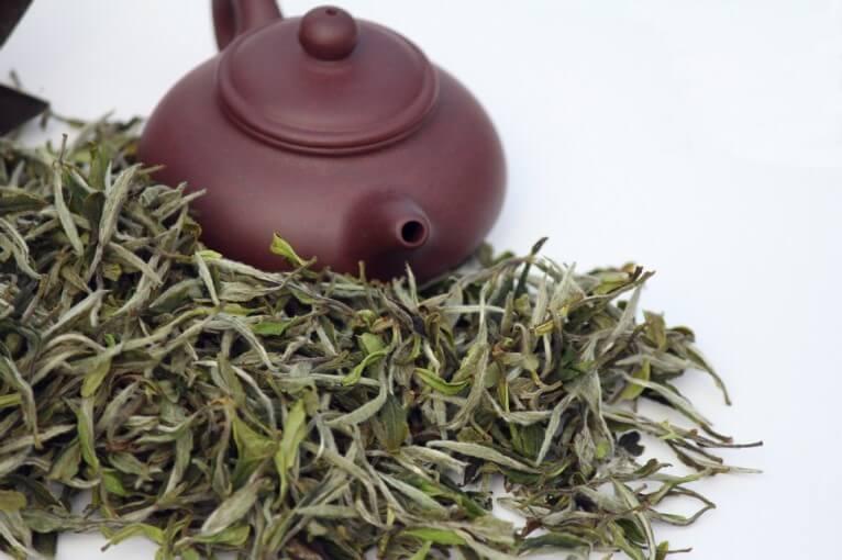 Beyaz Çay Yetiştiriciliği
