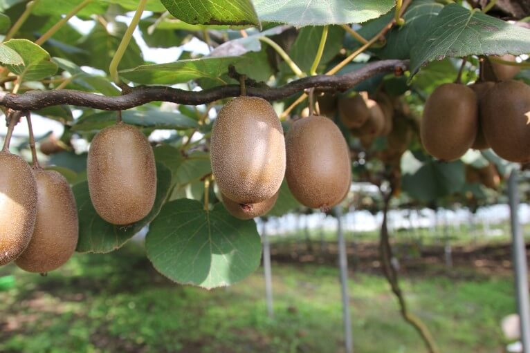 Alternatif Tarım Ürünleri