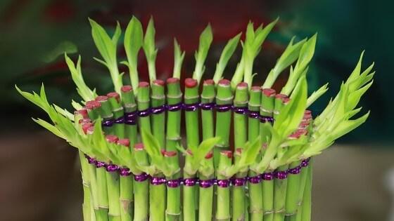 Bambu çiçeği bakımı