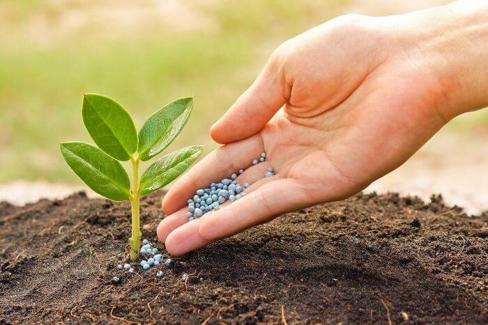 Bitkilerin İhtiyaç Duyduğu Mineraller