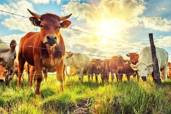 Hayvancılık Yapmak - En Karlı Hayvan Yetişticiliği Fikirleri