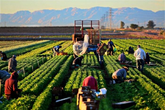 Tarım ürünlerinin ihtiyaç duyduğu mineraller ve besinler