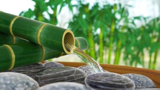 bambu ağacı özellikleri