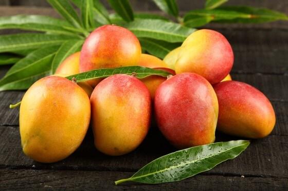 Mango Yetiştiriciliği