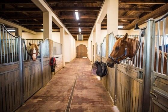 At Çiftliği Kurmak İçin Gerekli Belgeler