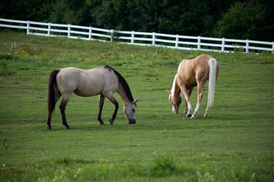 At Çiftliği Kurmak