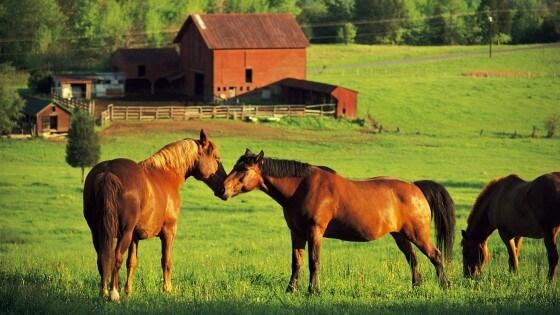 At Çiftliği Kurmak2