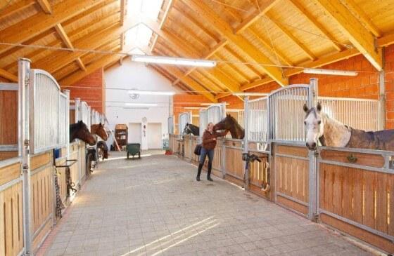 At Yetiştiriciliği İçin Gerekli Malzemeler