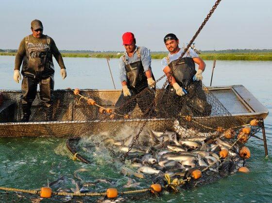Balık Çiftliği Kazancı