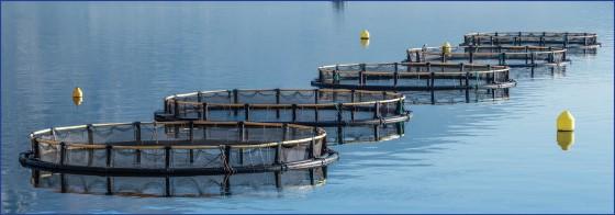 Balık Çiftliği Nerede Kurulur