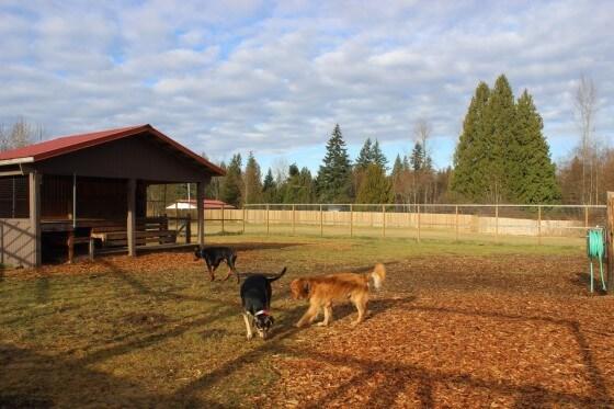 Köpek Çiftliği Kurma Şartları