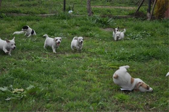 Köpek Çiftliği Kurmak Kazançlı mı