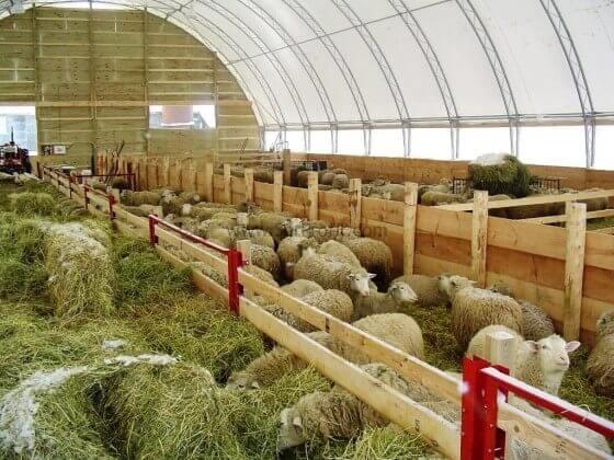 Küçükbaş Hayvan Çiftliği Kurulumu