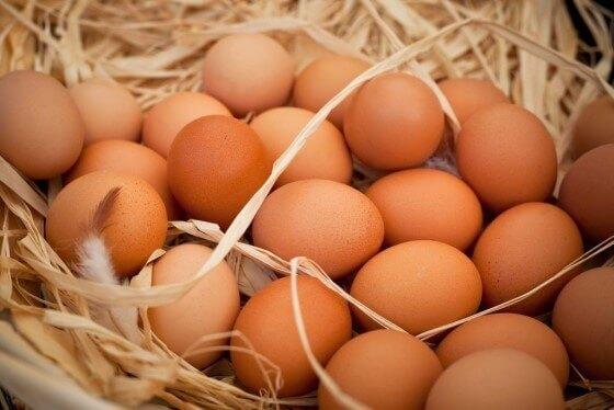 Organik Yumurta Üreticiliği