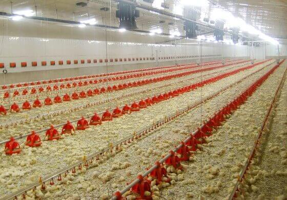 Tavuk Çiftliği Kurulumu Gerekli Belgeler