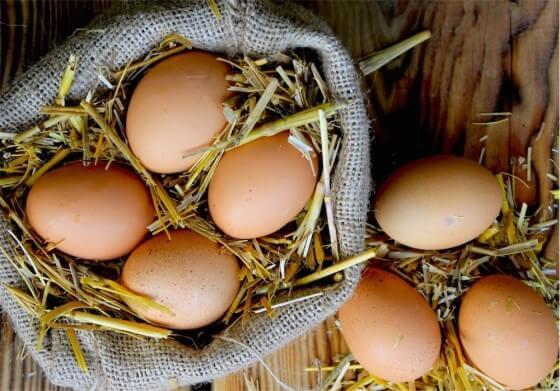 Gezen Tavuk Yumurta Üretimi