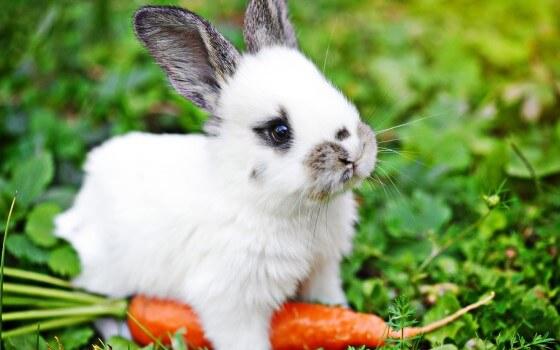 Tavşan Yetiştiriciliği Devlet Desteği