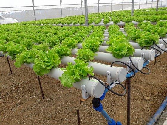 Topraksız Tarım Yapın- Yeni İş Fikirleri