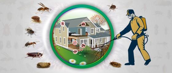 Böcek İlaçlama Açmak 2
