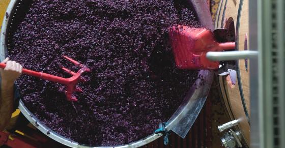 Şarap Yapımı