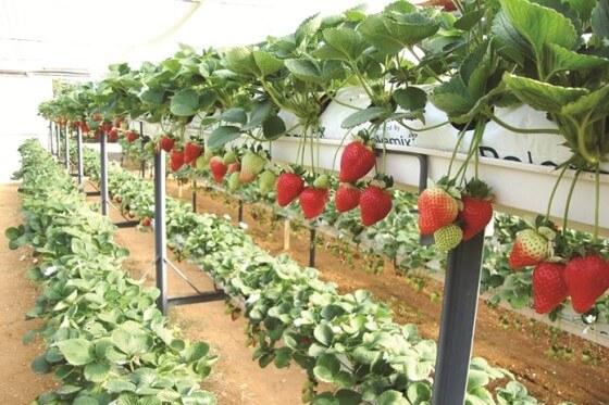 Topraksız Tarım Ürünleri Üretmek