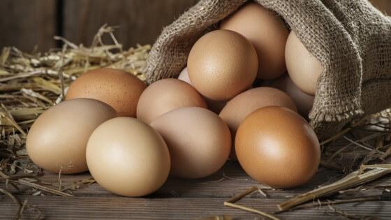 Toptan Yumurta Satışı Yapmak